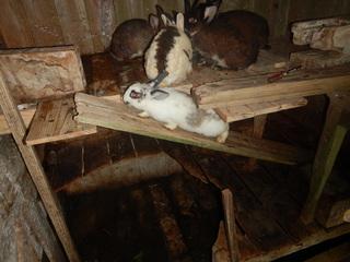 0330駆け上るウサギ.JPG