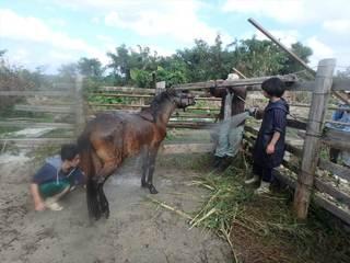 12月31日馬洗い.JPG