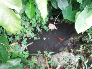 きれいな池.JPG