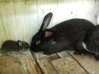 ウサギの赤ちゃん.JPG