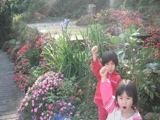 タチガー花盛り.JPG