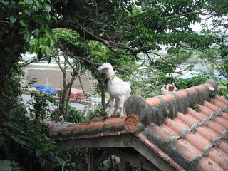 屋根の上のヤギ1.JPG