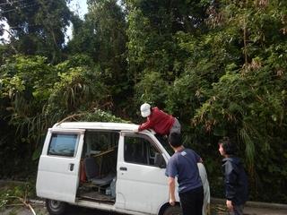 木の伐採 (2).jpg