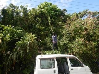 木の伐採 (3).jpg