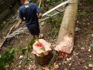 木の血.JPG