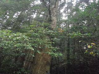 枝付き木.JPG