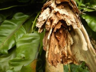 白アリの巣.JPG