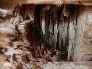 白アリの巣接写.JPG