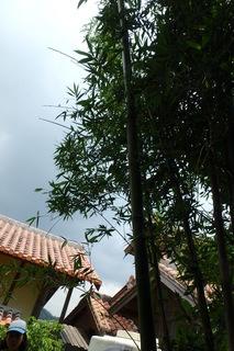 裏山の竹.JPG