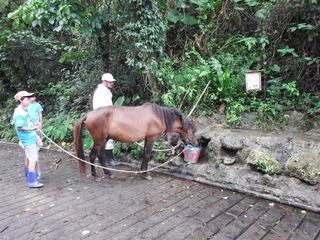 馬の水飲み.JPG