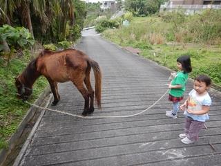 馬引き.JPG