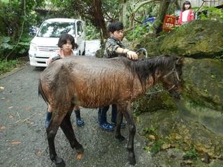 馬洗い.JPG
